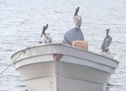 Birds on a boat